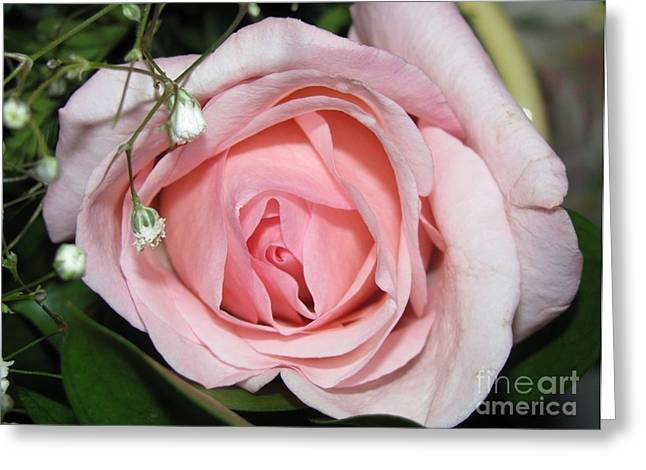 Babys Breaths Greeting Cards - Pink Rose Petals Greeting Card by Margaret Newcomb