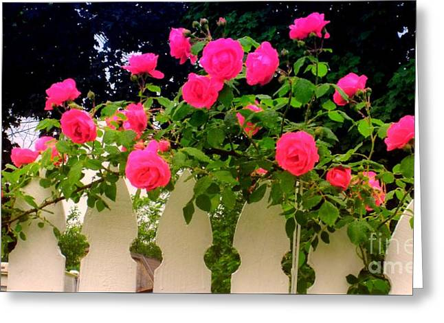 Flowers On A Fence Greeting Cards - Pink Rose Pickets Greeting Card by Margaret Newcomb