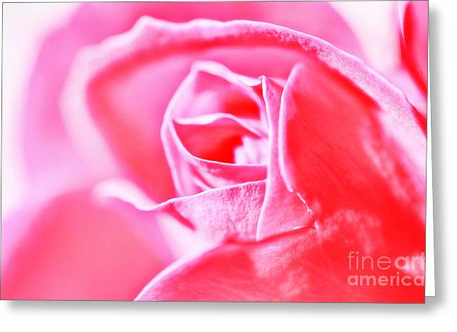 Mothers Day Greeting Cards - Pink Rose Greeting Card by Sabine Jacobs