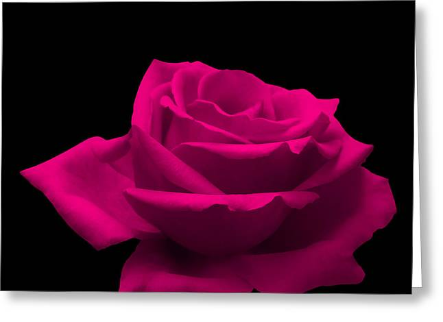 Passion Greeting Cards - Pink Rose Greeting Card by Wim Lanclus