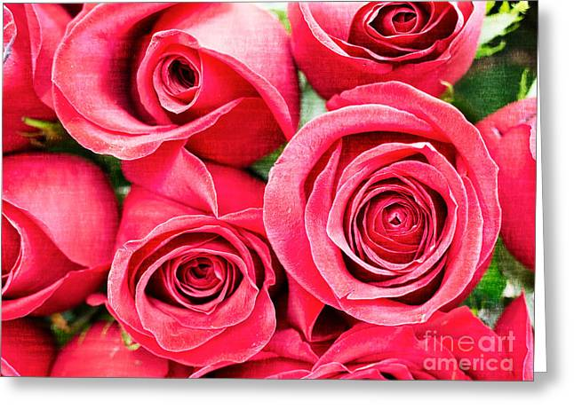 Valentines Day Greeting Cards - Pink Roses Flowers  Greeting Card by Edward Fielding