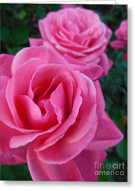Rose Petals Greeting Cards - Pink Roses Greeting Card by Rowena Throckmorton