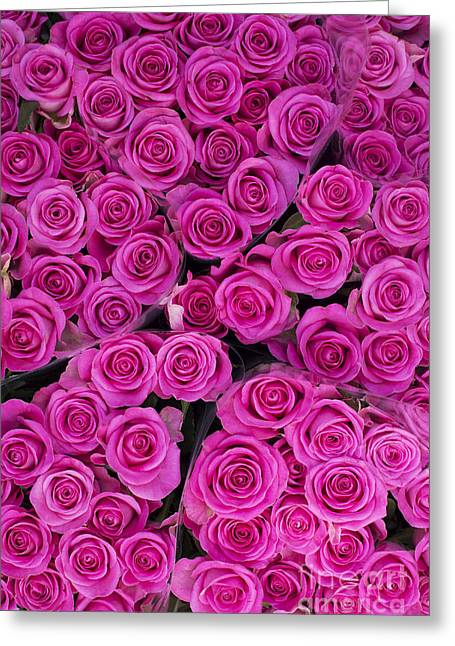 Tim Greeting Cards - Pink Roses Greeting Card by Tim Gainey
