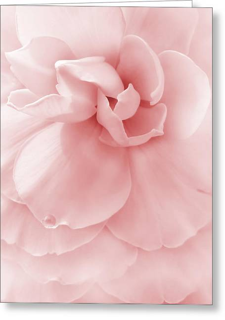 Begonias Greeting Cards - Pink Ruffled Begonia Flower Greeting Card by Jennie Marie Schell