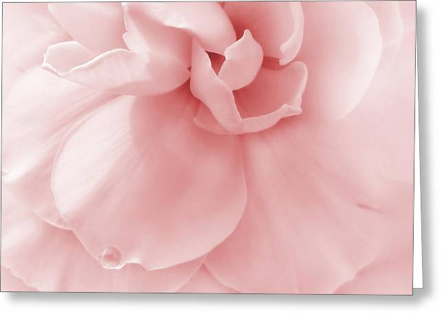 Pink Ruffled Begonia Flower Greeting Card by Jennie Marie Schell