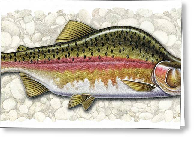 Coho Paintings Greeting Cards - Pink Salmon Spawning Phase Greeting Card by JQ Licensing
