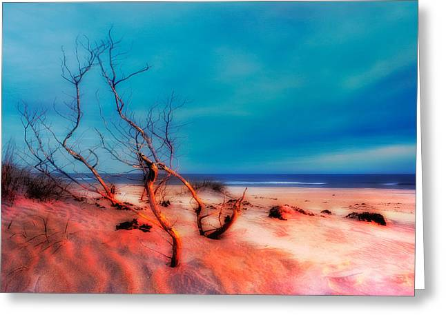 Sea Oats Greeting Cards - Pink Sands Blue Sky - Outer Banks I Greeting Card by Dan Carmichael