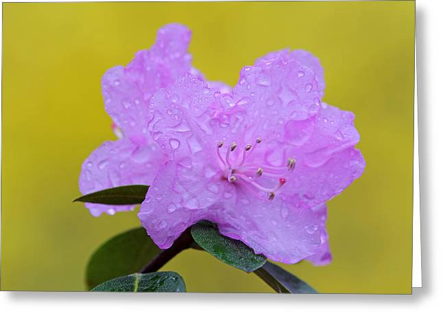 Floral Pictures Greeting Cards - Pink Spring Blossom Greeting Card by Juergen Roth