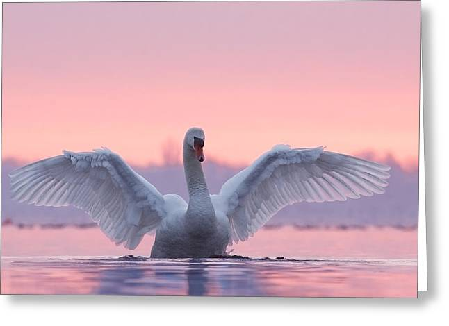 Swan Greeting Cards - Pink Swan Greeting Card by Roeselien Raimond