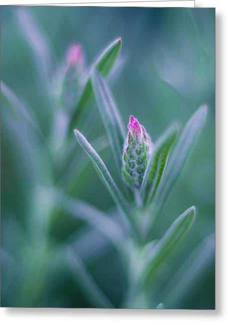 Nature Scene Pyrography Greeting Cards - Pink tip Greeting Card by Vincent  Dale