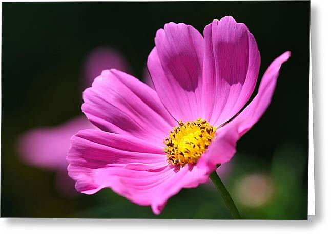 Pink Flower Prints Greeting Cards - Pink Greeting Card by Tracy Male