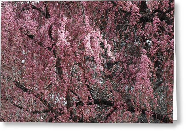 PINK TREE IN BLOOM Greeting Card by ADSPICE STUDIOS