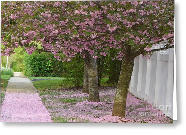 Lighted Pathway Greeting Cards - Pink Tree Petal Path Greeting Card by Adspice Studios