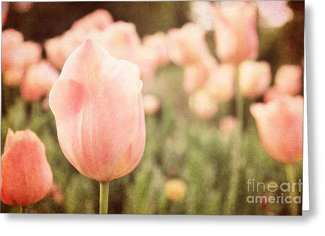 Mother Gift Photographs Greeting Cards - Pink Tulip Field Greeting Card by Emily Kay