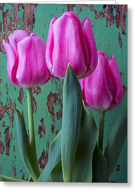 Pink Tulip Greeting Cards - Pink tulips against green wall Greeting Card by Garry Gay