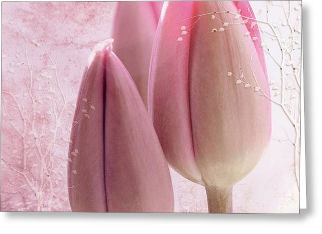 Pink Tulips  Greeting Card by Elaine Manley