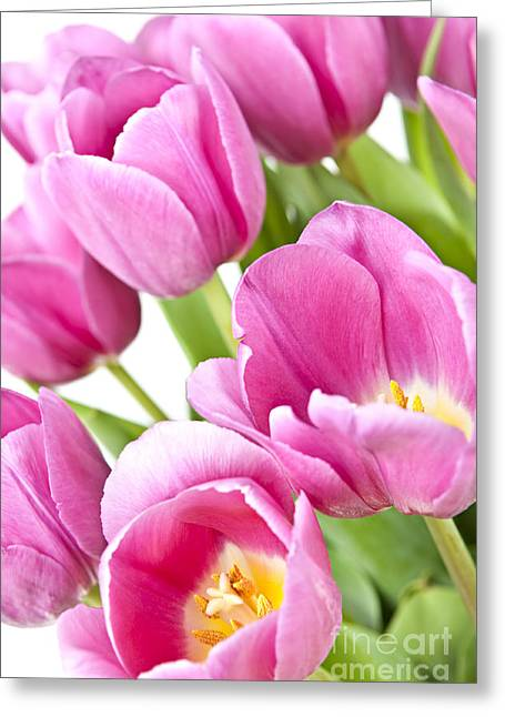 Blooms Greeting Cards - Pink tulips Greeting Card by Elena Elisseeva