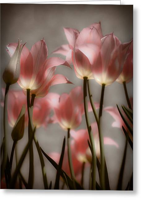 Pink Tulips Glow Greeting Card by Michelle Joseph-Long