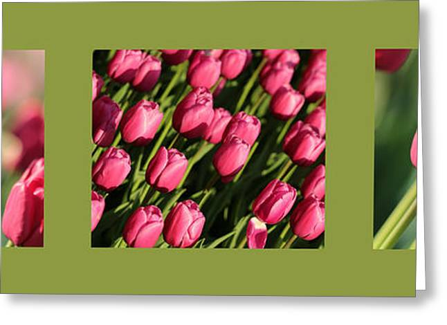 Pinks And Greens Greeting Cards - Pink Tulips in Green Triptych Greeting Card by Carol Groenen