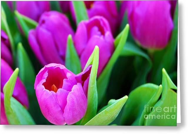 Mothers Day Greeting Cards - Pink Tulips Greeting Card by Sabine Jacobs