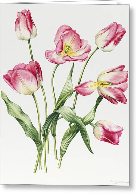 Botanical Greeting Cards - Pink Tulips Greeting Card by Sally Crosthwaite
