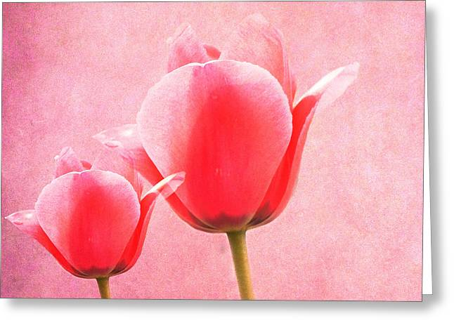 Close Focus Floral Greeting Cards - Pink Tulips Greeting Card by Sheela Ajith