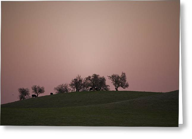 Pink Twilight Greeting Card by Joel Moranton