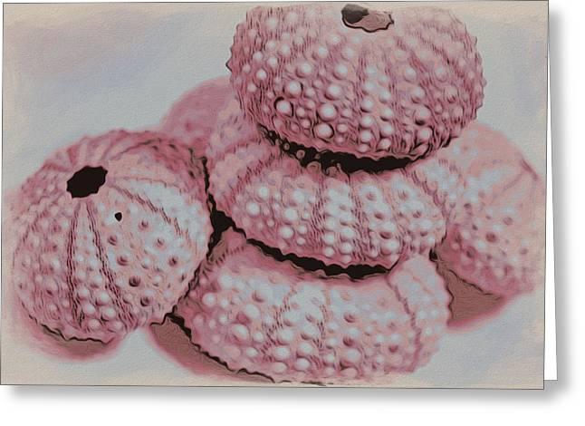 Coastal Decor Mixed Media Greeting Cards - Pink Urchin Shells Greeting Card by Bonnie Bruno