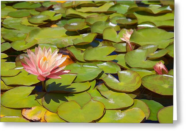Goldfish Mixed Media Greeting Cards - Pink Waterlilies in Koi Pond Greeting Card by Cliff Wassmann