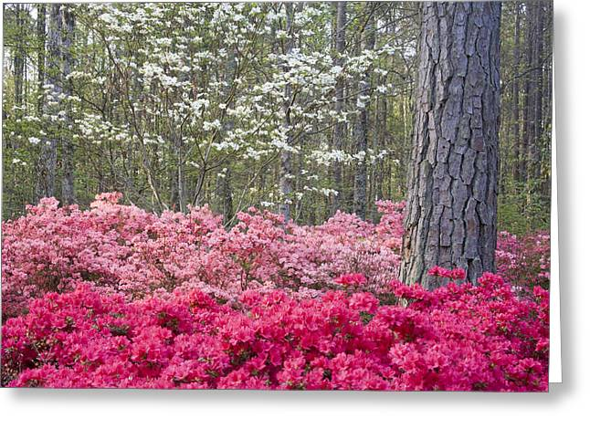 Chatham Greeting Cards - Pinks Greeting Card by Eggers   Photography