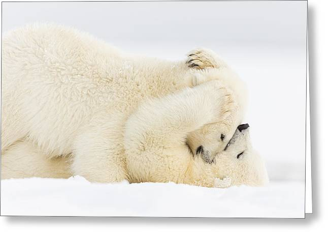 Polar Bear Standing Greeting Cards - Pinned to the Snowy Mat Greeting Card by Tim Grams