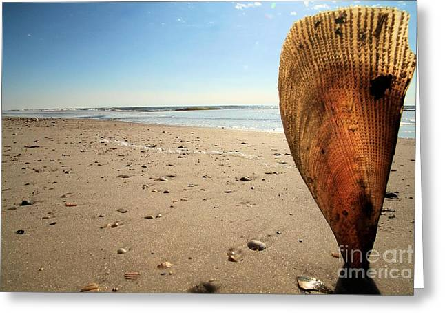St Joseph Peninsula State Park Greeting Cards - Pinnidae Greeting Card by Adam Jewell