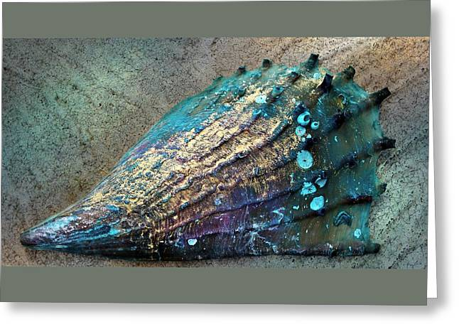 Ocean Photography Paintings Greeting Cards - Pinnidae AKA Pen Shell Greeting Card by Barbara Chichester