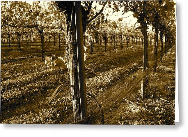 Zinfandel Photographs Greeting Cards - Pinot Growth Greeting Card by Paul Foutz