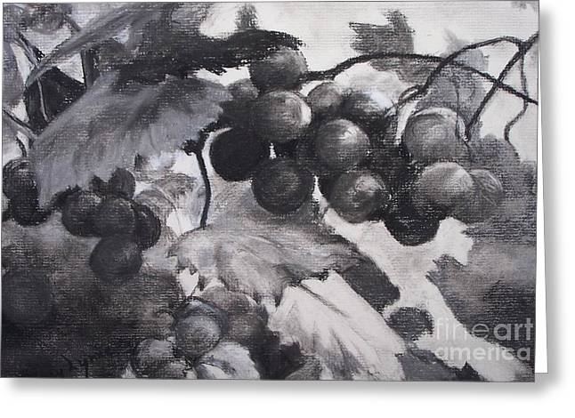 Grapevine Drawings Greeting Cards - Pinot Noir Greeting Card by Mary Lynne Powers