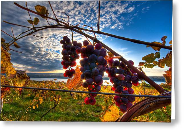 Finger Lakes Pyrography Greeting Cards - Pinot on the Vine Greeting Card by Walter Arnold