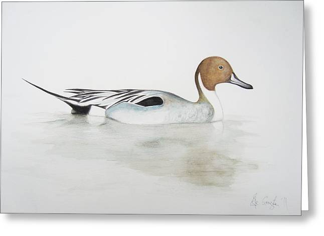 Wildlife Art Posters Greeting Cards - Pintail Duck Greeting Card by Ele Grafton