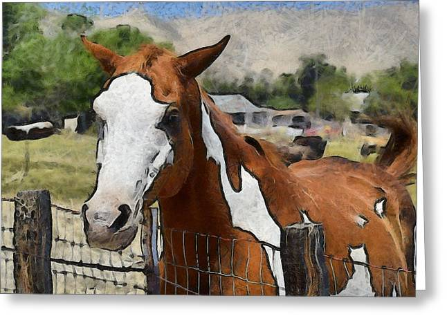 Original Cowgirl Greeting Cards - Pinto In The Pasture 2 Digital Greeting Card by Barbara Snyder