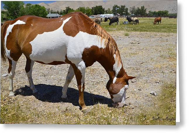 Original Cowgirl Greeting Cards - Pinto In The Pasture Greeting Card by Barbara Snyder