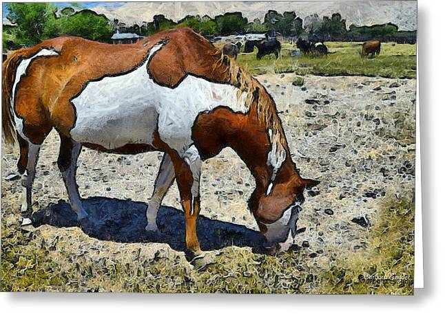 Original Cowgirl Greeting Cards - Pinto In The Pasture Digital Greeting Card by Barbara Snyder