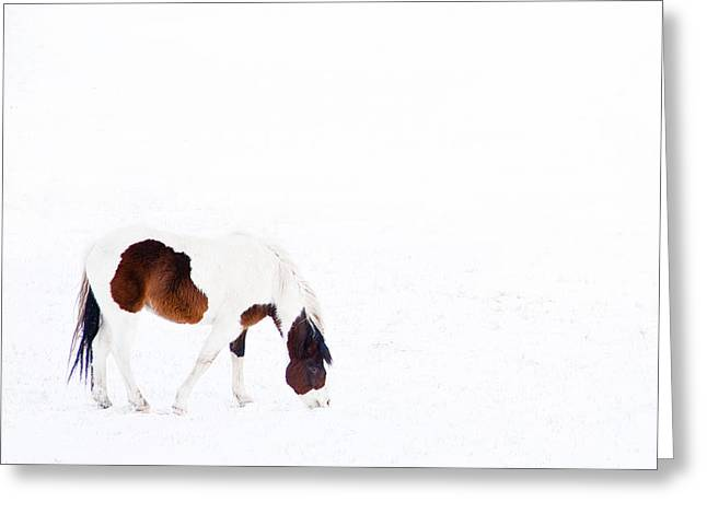 Winterscape Greeting Cards - Pinto Pony Greeting Card by Theresa Tahara