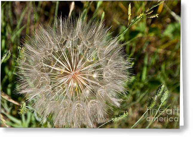 Parachute Ball Greeting Cards - Pinwheel Greeting Card by Finesse Fine Art