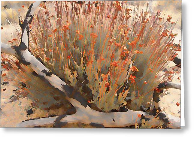 Sand Greeting Cards - Pinyon Hugging Daisies Greeting Card by Scott Campbell