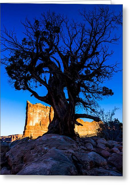 Arches National Park Pine Trees Greeting Cards - Pinyon Pine Silhouetted Against the Tower of Babel Greeting Card by Jamie Brancoccio