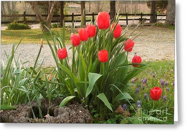 Pipe Organ Greeting Cards - Pipe Organ Red Tulips  Greeting Card by Kip DeVore