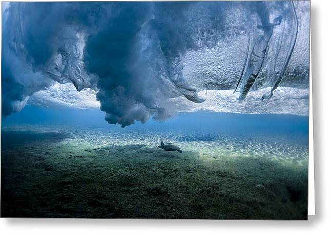 Transparency Greeting Cards - Turtle Turbulence Greeting Card by Sean Davey