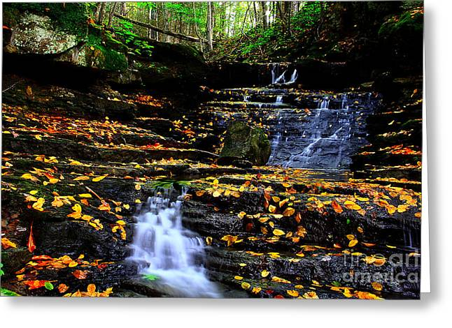 Autumn Prints Greeting Cards - Pipestem Beauty Greeting Card by Melissa Petrey
