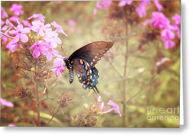 Pipevine Swallowtail Butterfly Greeting Card by Lena Auxier