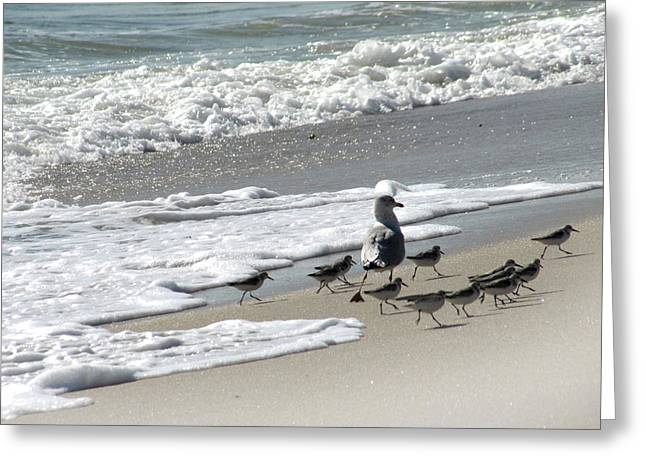 Fire Island Greeting Cards - Piping Plover Birds Greeting Card by Maude Renganeschi