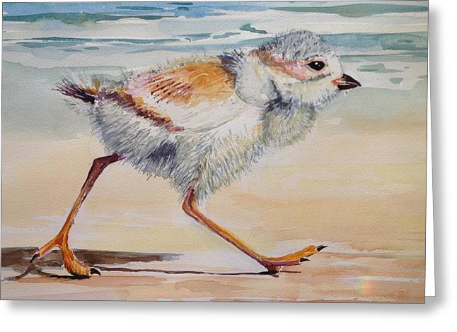Ocean Shore Pastels Greeting Cards - Piping Plover Chick Greeting Card by Barbara Richert